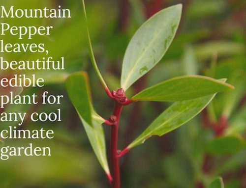 About Pepperleaf & Pepperberries