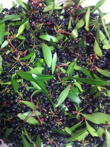 Mountain Pepperberries 30g